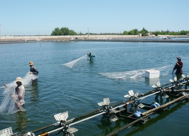 Development of Aquaculture according to the standards and meet the market's requirements