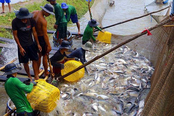 Tháo gỡ khó khăn trong sản xuất, tiêu thụ sản phẩm nuôi trồng thủy sản do ảnh hưởng bởi dịch bệnh Covid-19