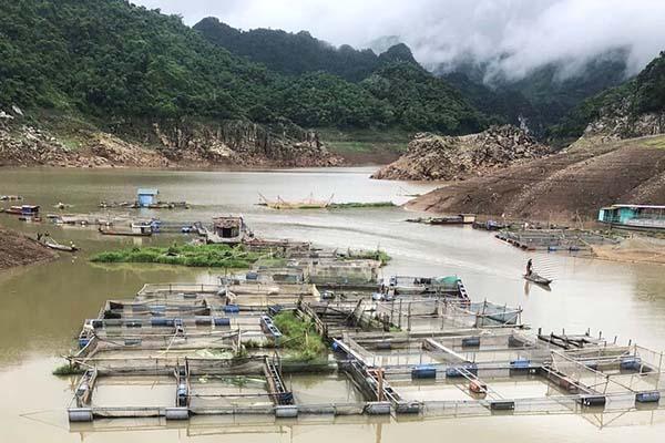 Hòa Bình: Thực hiện các biện pháp phòng tránh thiệt hại cá nuôi lồng, bè do nắng nóng và nước hồ thủy điện sông Đà xuống thấp