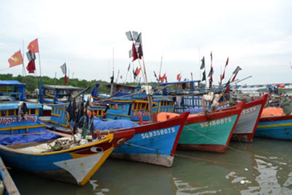 Thành phố Hồ Chí Minh: Kiên quyết không cho xuất bến đối với các tàu cá không đáp ứng quy định