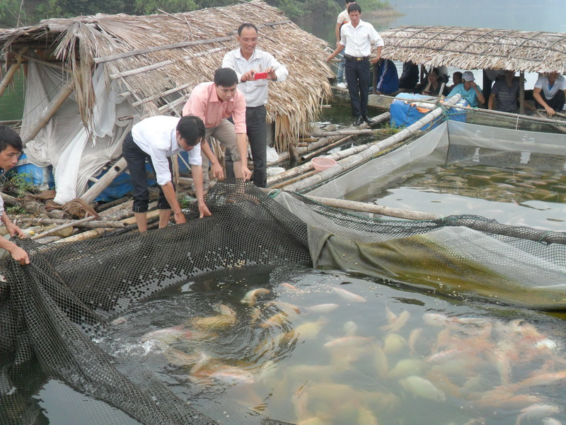 Technical training on aquaculture for 50 households in Thai Nguyen province