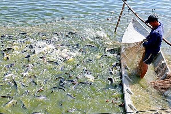 08 nhóm giải pháp phòng, chống dịch bệnh nguy hiểm trên thủy sản nuôi