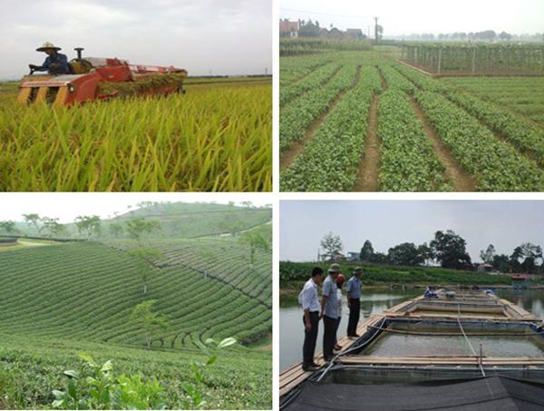 Quý I/2021, sản xuất nông lâm thủy sản tiếp tục đạt được kết quả cao, toàn diện
