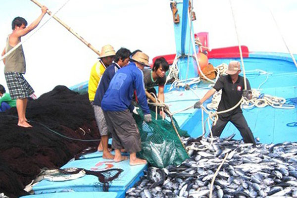 Binh Dinh Pushes against Illegal Fishing