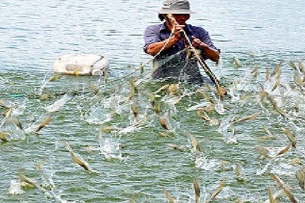 Giải pháp phát triển nuôi tôm nước lợ  hiệu quả, bền vững