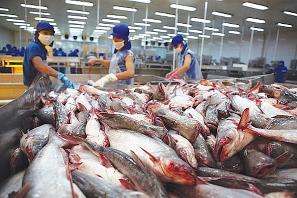 Seafood Exporters Must Maximize the Benefits of the New Generation of Free