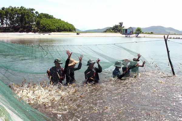 Nguy cơ kháng kháng sinh đang tăng lên đối với nuôi trồng thủy sản