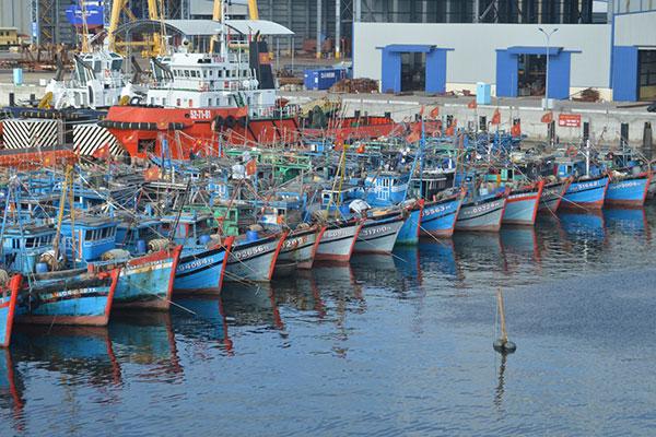 Xử lý vi phạm quy định về cảng cá, khu neo đậu tránh trú bão
