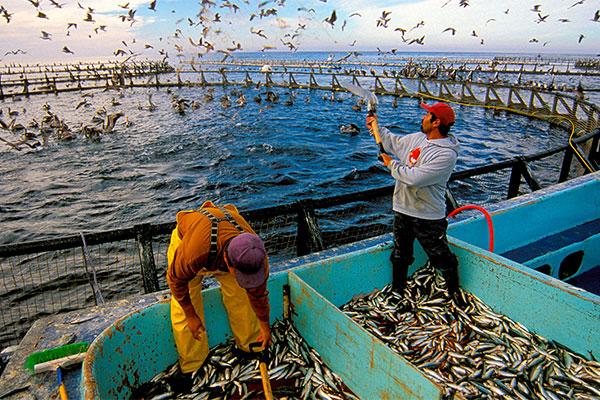 Giải pháp giúp người nuôi trồng thủy sản vượt qua khó khăn do Covid-19
