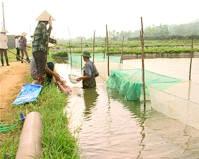 Ha Noi City: Aquaculture towards safety ways