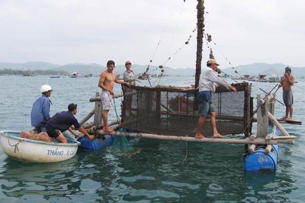 Giải pháp quy hoạch chi tiết và quản lý nuôi tôm hùm bền vững ở Phú Yên