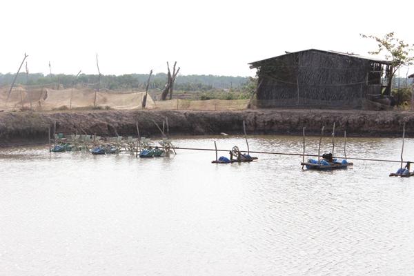 Tăng cường phòng, chống dịch bệnh thủy sản