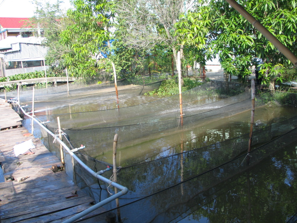 Renovating shrimp ponds associated with protection of aquaculture environment