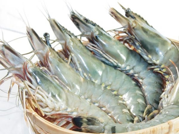 Vietnam shrimp exports started to reverse