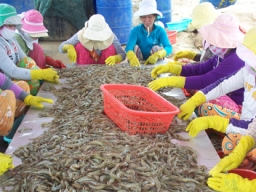 Shrimp industry contributes 40% among US$ 9 billion seafood export turnover