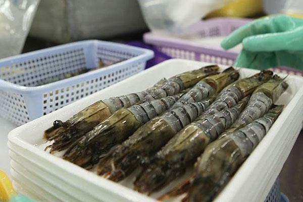 Phân tích về ngành tôm toàn cầu