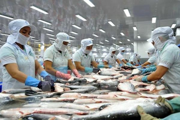 Đã có những thay đổi về tỷ trọng xuất khẩu cá tra tại các thị trường