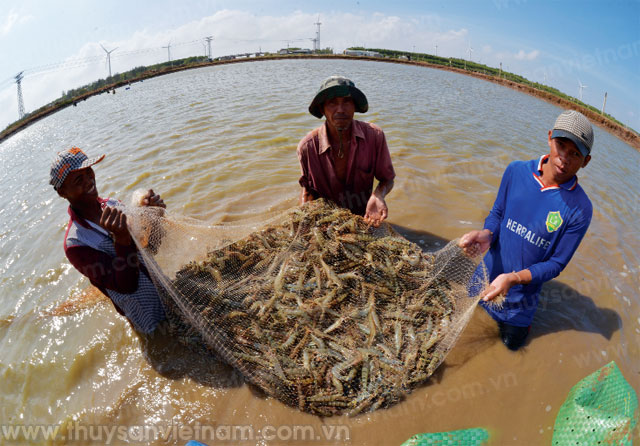 Bac Lieu City: Focusing on developing aquaculture and fishing